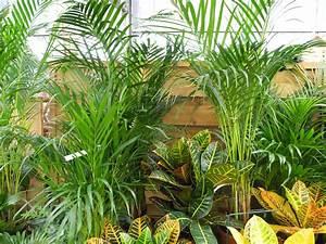 Plantes D39intrieur En Hiver Jardiner Avec Jean Paul