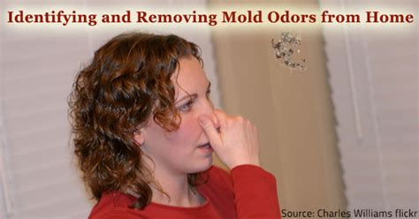 Identifying Mold Odors  Removing    Home