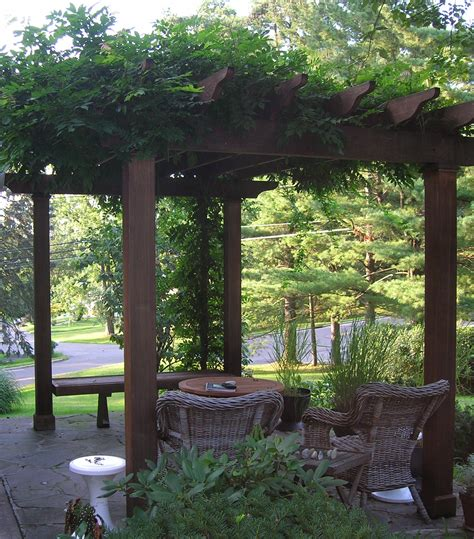 vines on pergola 301 moved permanently
