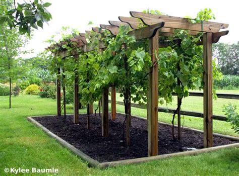 Grape Trellis by Best 25 Grape Arbor Ideas On Garden Arbor