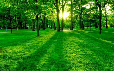 Green Forest Photo Hd by Green Forest Background Photo Ultra Hd