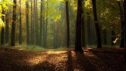 Forest Sunny Nature Autumn Wallpapers Desktop Seasons