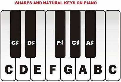 Piano Natural Sharp Flat Keys Notes Scale
