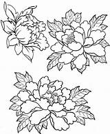 Embroidery Patterns Peony Coloring Flower Pages Peonies Drawings Designs Tattoo Painting Fabric Tracing Con рисунки пионов Drawing Flowers пионы Floral sketch template