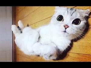 Top 10 FUNNIEST... Funny Cat Videos