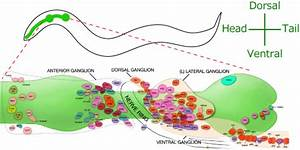 Observation Of The Whole Nervous System
