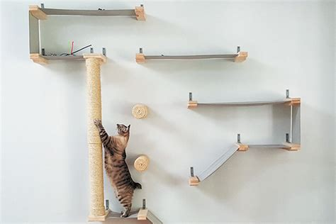 create  cat climbing system   home catster