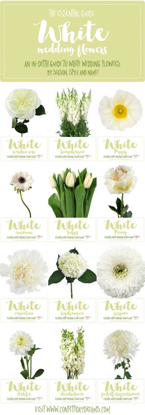essential white wedding flowers guide types  white