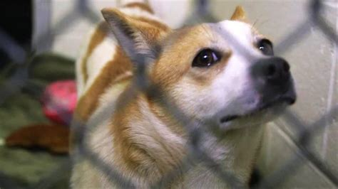 south korea  serving dog meat  olympic games