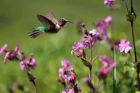 kolibris und seglervoegel