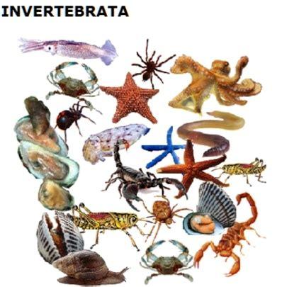 Klasifikasi Hewan (Vertebrata Dan Invertebrata) Dan ...