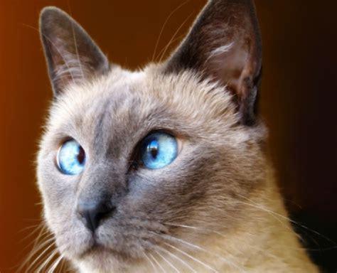 20 gatos engraçados que pensam que são seres humanos