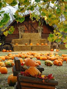 Papas Pumpkin Patch Hours by Thanks Weather Channel For The Shout Out Papa S Pumpkin