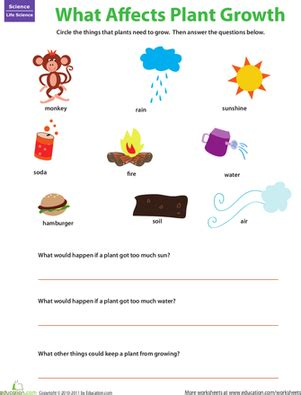 what do plants need to grow ks1 worksheet plant matters what plants need worksheet education