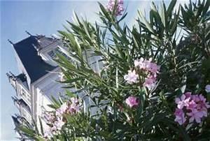 Oleander Im Winter : oleander is browning in the winter home guides sf gate ~ Orissabook.com Haus und Dekorationen