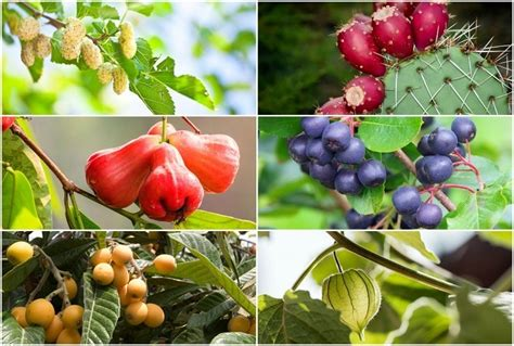 Top 20 Unique Fruits You Can Grow In Your Backyard