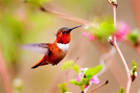 Wallpaper Animals And Birds - colorful hummingbird and flower wallpaper hd animals and