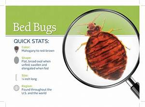 Bed bug attorney los angeles hotel infestation lawsuit for Bed bug laws