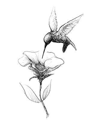 Hummingbird | Hummingbird tattoo, Hummingbird drawing, Tattoos