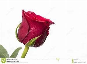 Single Red Rose Stock Photo - Image: 38882898