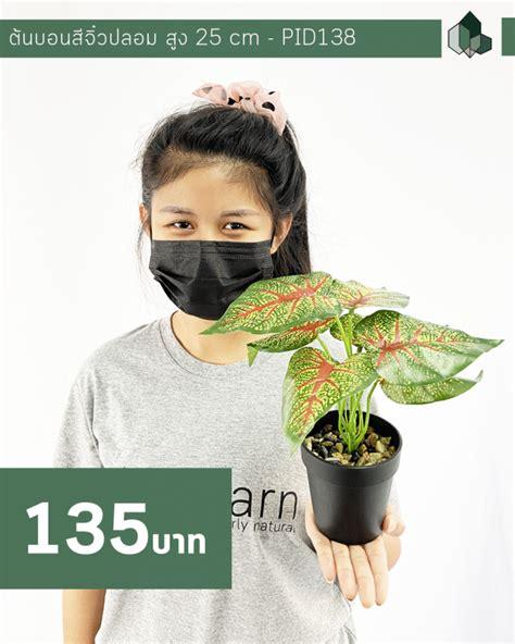 ต้นบอนสีจิ๋วปลอม สูง 25 CM - pimarn