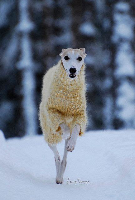 Attends Jarrive Greyhoundlove ️ Pinterest Chien
