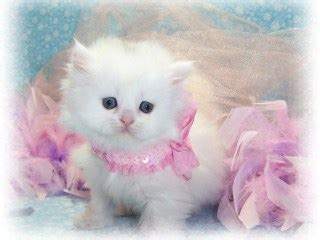 cute baby kittens black  white wallpaper cat pics