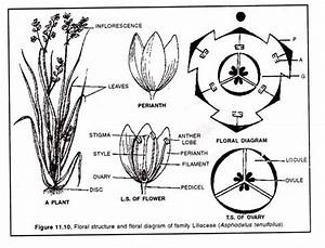 Families Of Flowering Plants And Their Economic Importance