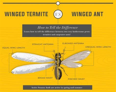kill termites   rid