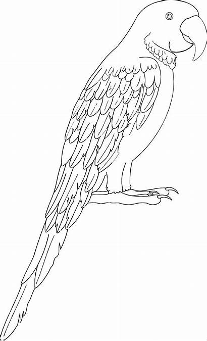 Macaw Coloring Pages Coloringbay