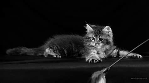 1920x1080 cat hd 1920x1080 magnifique bureau libre de papier 7383162
