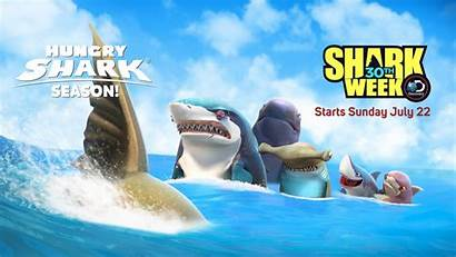 Shark Hungry Sharks Week Funny Wallpapers Games