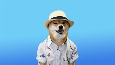 Doge Wallpaper 1920x1080 87 Images