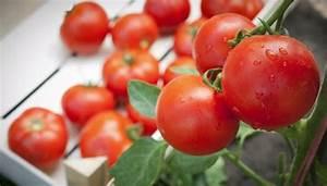 Wann Tomaten Pflanzen : tomaten pflanzen die richtige pflege bringt mehr ernte ~ Frokenaadalensverden.com Haus und Dekorationen