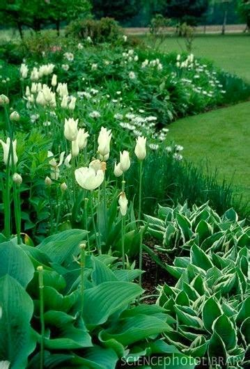 lady annes cottage charming shade garden