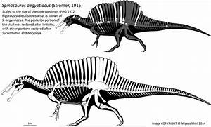 Spinosaurus Revised by Miyess on DeviantArt
