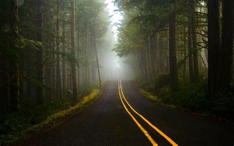 road dark forest wallpapers hd desktop  mobile