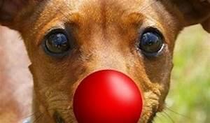 My Dog's Got No Nose : All Edinburgh Theatre.com