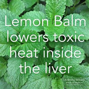 Medical Medium U00ae On Instagram   U201clemon Balm Lowers Toxic