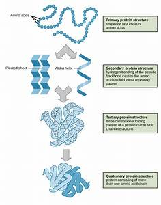 A Guide For Protein Structure Prediction Methods And