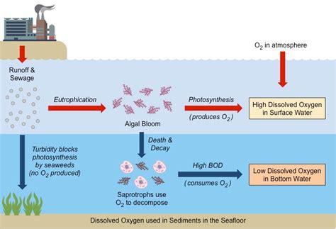 eutrophication bioninja