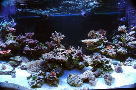 Aquascape Live Rock by A Brief Look At Minimalist Aquascapes No More Box Of