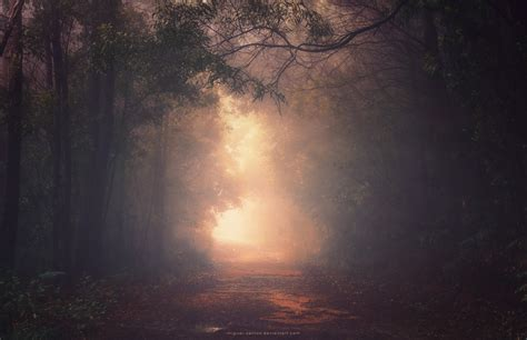 into the light into the light by miguel santos on deviantart