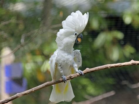 A Beginner's Guide To The Cockatoo