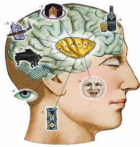 Cognitive Science Program | Cognitive Science Program ...