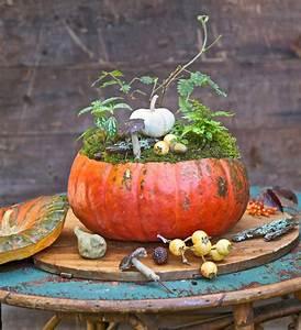 6, blooming, pumpkin, displays