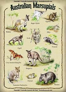 AUSTRALIAN MARSUPIAL CHART. | Animals of Australia ...