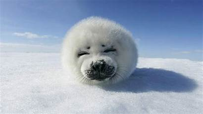 Panda Wallpapers Snow Sea Animals Funny Animal