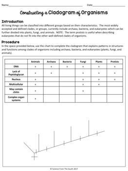 Constructing A Cladogram Of Organisms Activity Worksheet Tpt