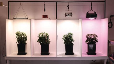 The leds are connected together in series to form a horticulture lighting group qb304, containing 8 rows of 38 leds. Quantum Board Vs COB LED Grow Lights - Seedz Lighting